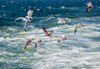 Designs Similar to Group Of Seagulls Over Sea