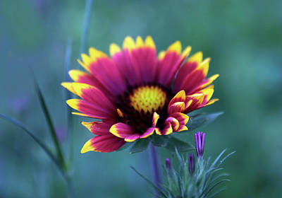 Designs Similar to Indian Blanket Beauty