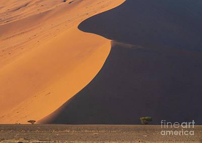 Designs Similar to Sossusvlei Namibia Two Trees