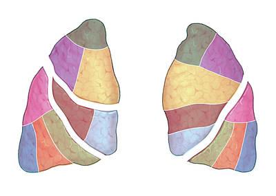 Atlas Of Human Anatomy Posters