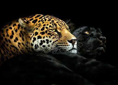Black Panther Photographs