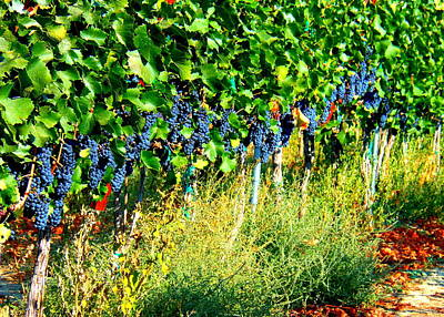 Windy Point Vineyards Prints