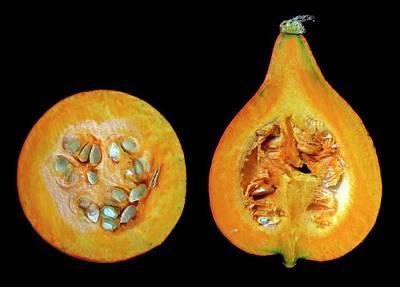Cucurbitaceae Photographs