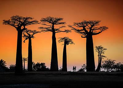Baobab Art Prints