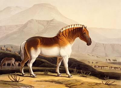 Wild Pony Drawings Prints
