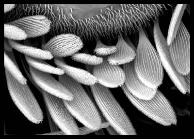 Scanning Electron Microscope Original Artwork