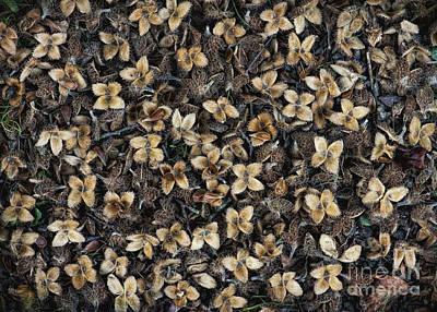 Beechnut Photographs