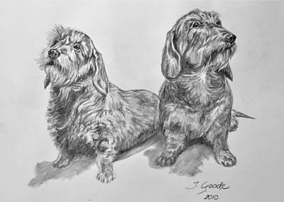 Dachshund Puppy Drawings