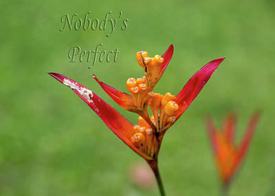 Designs Similar to Nobody's Perfect by Betsy Knapp