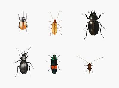 Bug Drawings