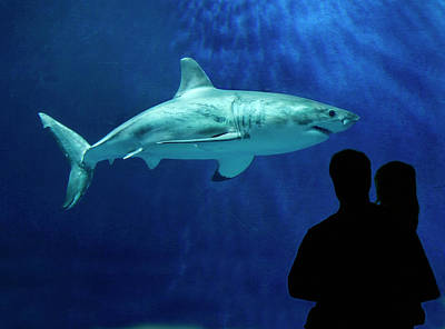 Designs Similar to Great White Shark