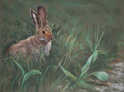Bunny Art Prints