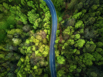 Designs Similar to Road In The Forest