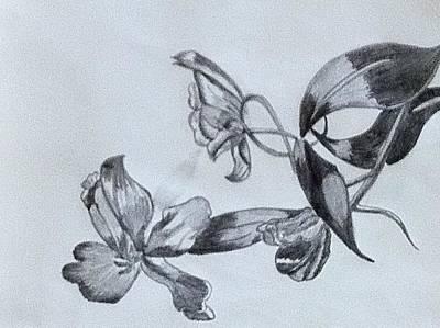 Springflowers Drawings Prints