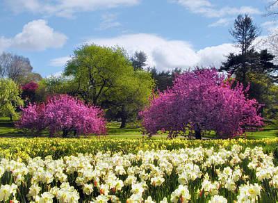 Daffodil Hill Art