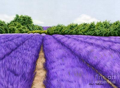 Lavender Drawings Prints