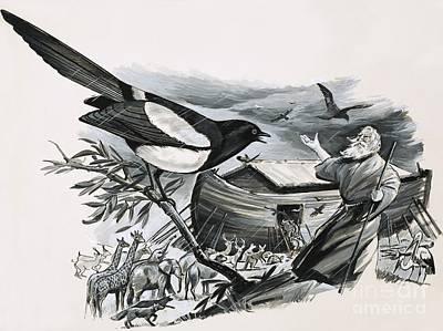 Magpies Drawings