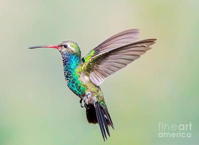 Designs Similar to Broad Billed Hummingbird. Using