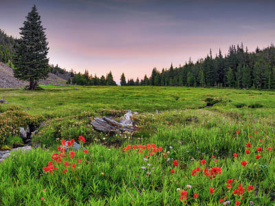 Designs Similar to Colorful Mountain Meadow