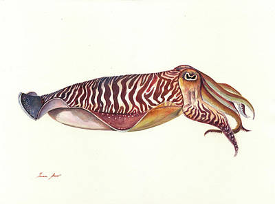Designs Similar to Cuttlefish Watercolor