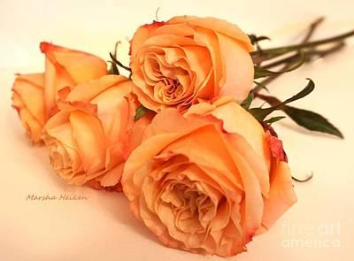 Designs Similar to Ginny Roses by Marsha Heiken