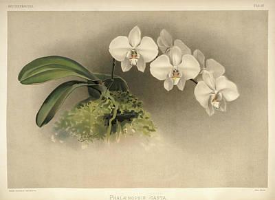 Designs Similar to Orchid, Phalaenopsis Casta