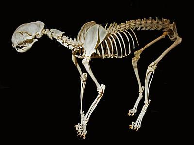 Designs Similar to Serval Skeleton
