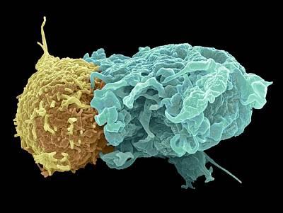 Designs Similar to Antigen Presentation, Sem