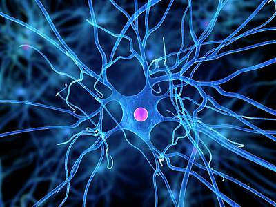 Neurobiology Posters