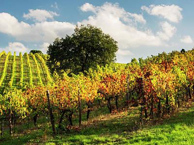 Designs Similar to Italy, Tuscany, Chianti, Autumn