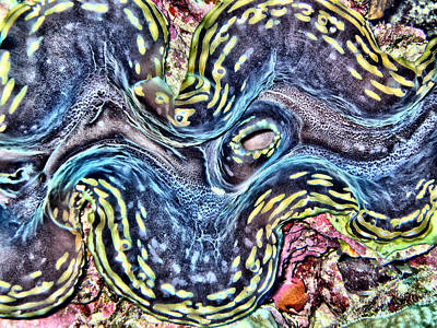 Designs Similar to Fluted Giant Clam