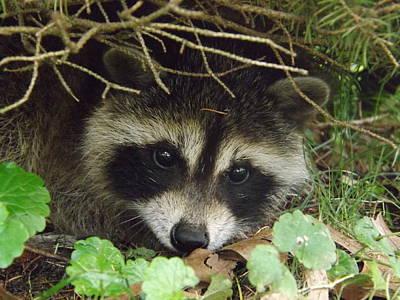 Raccoon Digital Art Original Artwork