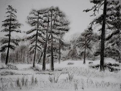 New Jersey Pine Barrens Drawings