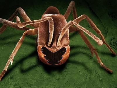 Army Ant Art