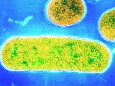 Designs Similar to E. Coli Bacterium