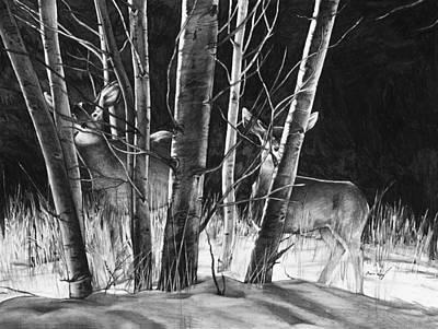 Whitetail Drawings