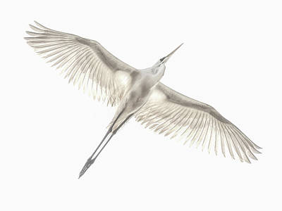 Avian Art Prints