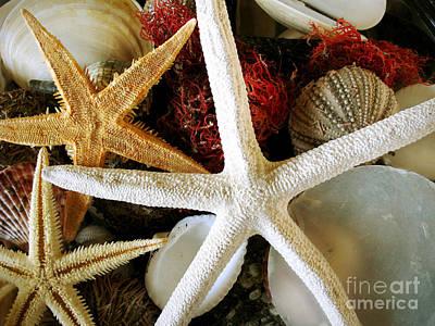 Sea Shells Of Sanibel Prints