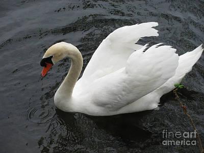Designs Similar to White Swan by Steven Parker