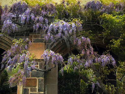 Designs Similar to Wisteria Vine by Jessica Jenney