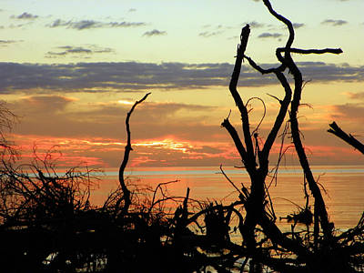 Designs Similar to Driftwood Sunset Silhouette