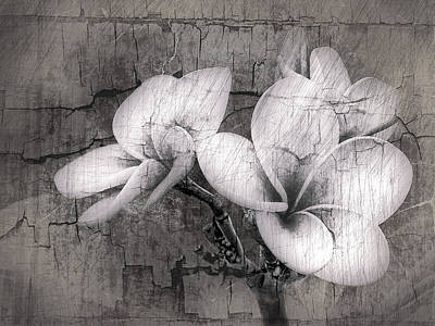 Hawii Digital Art