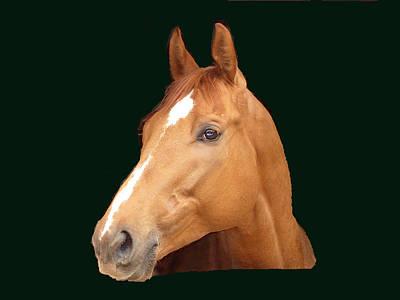 Race Horse Digital Art Prints