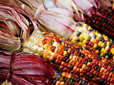 Indian Corn Photographs Original Artwork