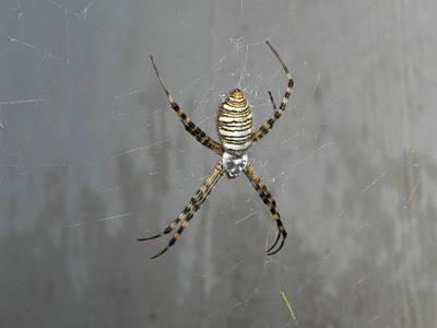 Adrienne Petterson: Arachnid Art