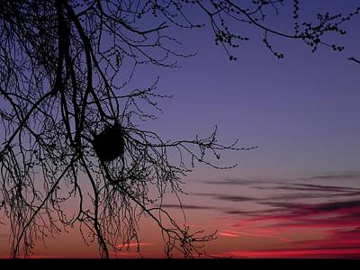 Adrienne Petterson: Morning Art