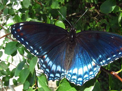 Designs Similar to Wings Of Blue  by Robert Nacke