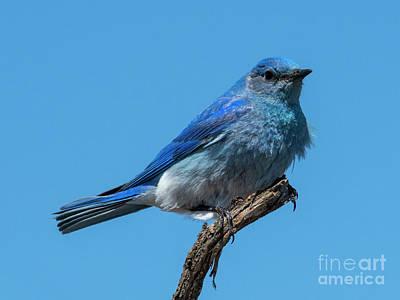 Designs Similar to Ruffled Blue by Mike Dawson