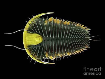 Designs Similar to Trilobite