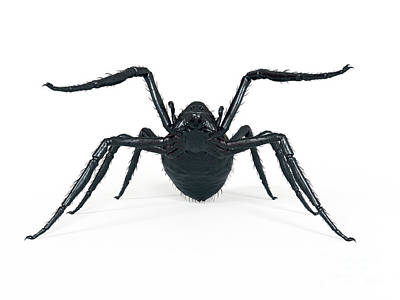 Designs Similar to Illustration Of A Spider